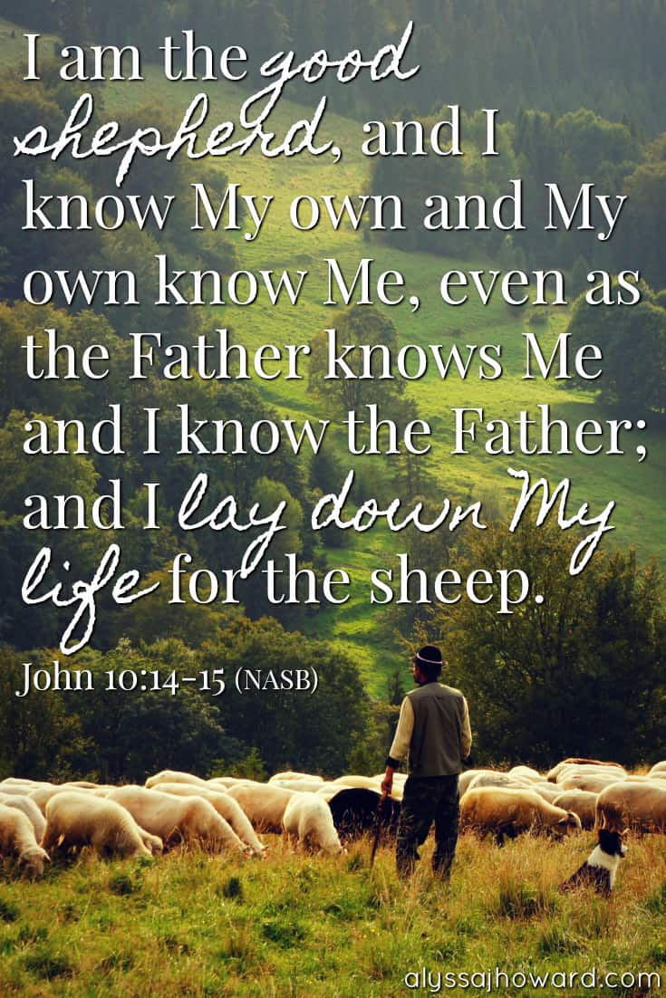 I am the good shepherd, and I know My own and My own know Me, even as the Father knows Me and I know the Father; and I lay down My life for the sheep. - John 10:14-15