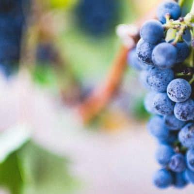 Did Jesus Drink Wine or Grape Juice? (and does it really matter?)